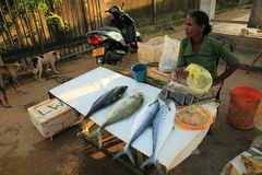 Negombo Fish Market Stock Images