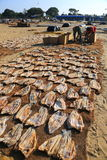 Negombo Fish Market Stock Image