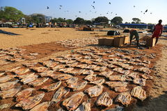 Negombo Fish Market Royalty Free Stock Image