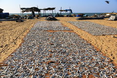 Negombo Fish Market Royalty Free Stock Photos