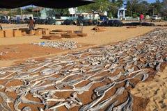 Negombo Rybi rynek Obraz Royalty Free