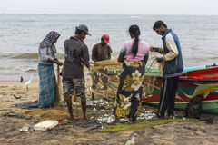 NEGOMBO, SRI LANKA - NOVEMBER 30: De mensen verzamelen droge vissen en Stock Afbeelding