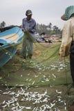 NEGOMBO, SRI LANKA - NOVEMBER 30: De mensen verzamelen droge vissen en Stock Foto's