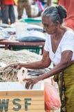 Negombo, Sri Lanka Venditore del pesce della donna Immagini Stock
