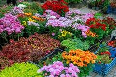 Negozio con vari fiori variopinti della molla Fotografia Stock