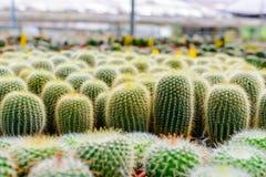 Negozio dell'albero del cactus con l'allevamento nella casa Immagini Stock Libere da Diritti
