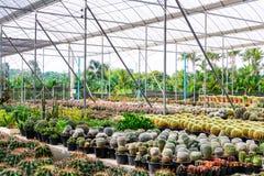 Negozio dell'albero del cactus con l'allevamento nella casa da vendere Immagine Stock
