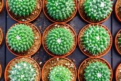 Negozio dell'albero del cactus con l'allevamento nella casa da vendere Fotografia Stock Libera da Diritti