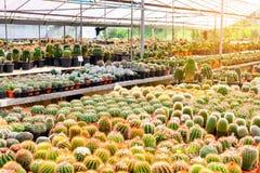 Negozio dell'albero del cactus con l'allevamento nella casa da vendere Immagini Stock Libere da Diritti