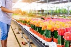 Negozio dell'albero del cactus con l'allevamento nella casa da vendere Immagini Stock