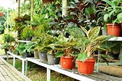 Negozio delle piante ornamentali Fotografia Stock Libera da Diritti
