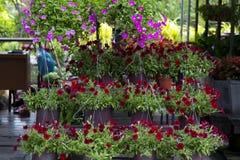Negozio di fiore Immagine Stock