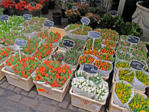 Negozio di fiore a Amsterdam 1012 Immagini Stock