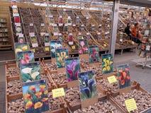 Negozio di fiore a Amsterdam 1013 Fotografia Stock Libera da Diritti