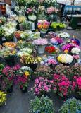 Negozio di fiore della via Immagine Stock