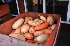 Negozio locale della frutta, commerciante in Princeton, Columbia Britannica Decorazione piacevole con la zucca, groud, frutti Fotografie Stock Libere da Diritti