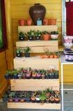 Negozio mini cactus o PS di Mila Fotografia Stock Libera da Diritti