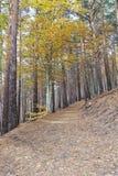 negra bukowy lasowy tejera Fotografia Stock