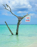 Negril Beach. Tree in the sea at Negril Beach Jamaica stock images