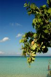 Negrils beach. Tree in negrils beach, Jamaica Stock Photo