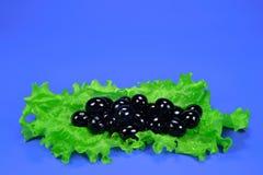 Negro de las aceitunas con la ensalada de la hoja Imagen de archivo