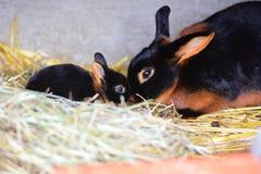 negro del fuego del conejo Imagen de archivo libre de regalías