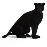 Negro del leopardo del gato grande Fotos de archivo