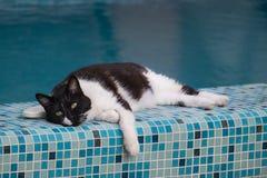 Negro - el gato blanco miente al borde de la piscina fotografía de archivo