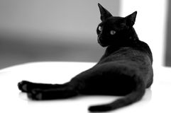 Negro y blanco Imagen de archivo libre de regalías