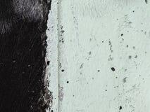 Negro y pálido - fondo verde Imagenes de archivo