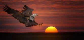 Nehmen Sie den Sun gefangen Lizenzfreies Stockfoto