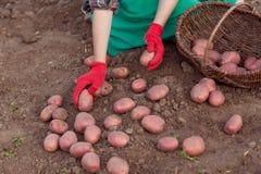 Nehmen Sie die Ernte Stockfotografie