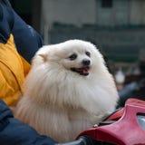 Nehmen Sie ein Haustier für Weg lizenzfreies stockfoto