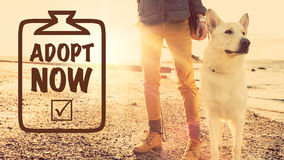 Nehmen Sie ein Hundekonzept an lizenzfreie stockbilder