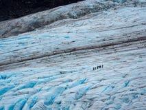 Nehmen Sie Gletscher, den Wanderer heraus, der Eis, Kenai-Fjord-Nationalpark überquert lizenzfreie stockfotos