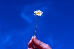 Nehmen Sie meine Freundschaft, Himmel, Hand, Gänseblümchen, Konzept an Lizenzfreie Stockfotos