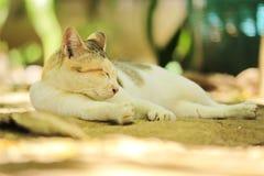 Nehmen von Nahaufnahmen der Beschaffenheit der Katzen lizenzfreie stockfotos