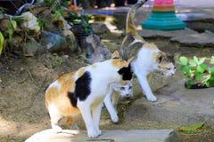 Nehmen von Nahaufnahmen der Beschaffenheit der Katzen lizenzfreie stockbilder