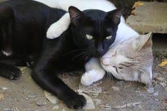 Nehmen von Nahaufnahmen der Beschaffenheit der Katzen stockbilder