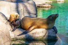 Nehmensonne in der Familie an Bronx-Zoo stockfoto