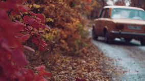 Nei giri dell'automobile della foresta di autunno video d archivio