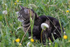 Nei mouse di cattura dell'erba Immagini Stock Libere da Diritti