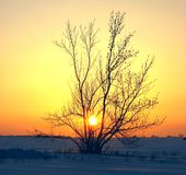 Nei raggi del tramonto fotografia stock libera da diritti