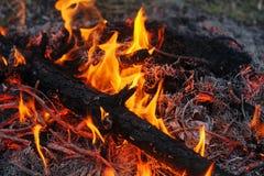 Nei rami brucianti e negli alberi di un fuoco di abetaia fotografia stock libera da diritti