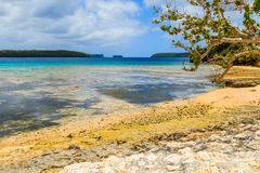 Neiafu Tonga Royaltyfri Bild