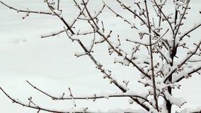 Neige échouant sur l'arbre clips vidéos