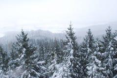 Neige. arbres Photo libre de droits