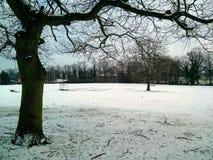 Neige, arbres, Darlington photos stock