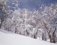 Neige au-dessous d'arbre Photographie stock libre de droits