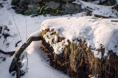 Neige au-dessus de végétation et de racines photographie stock libre de droits